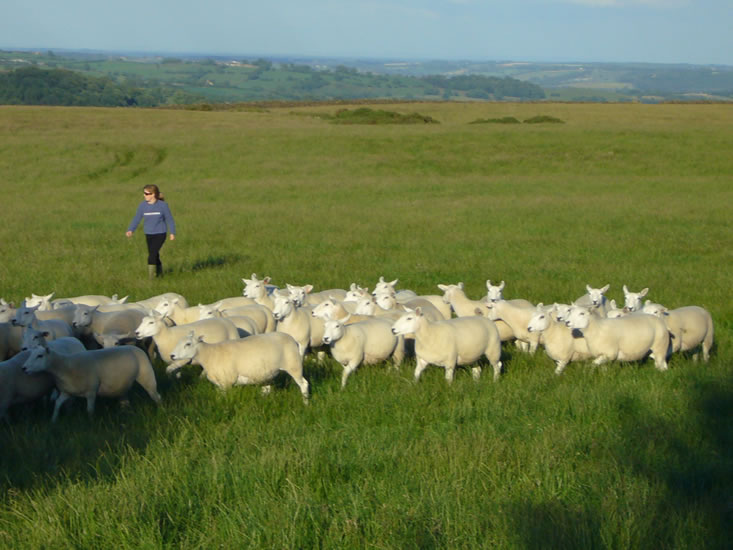 Shearlings