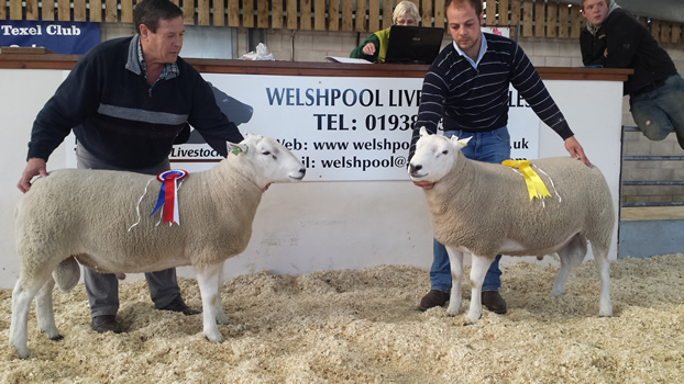 Welshpool Champion 2015 (2500gns Top Price) And 3rd  Prize