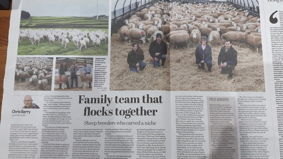 Fort Flock In The Yorkshire Post Newspaper 7/1/2018